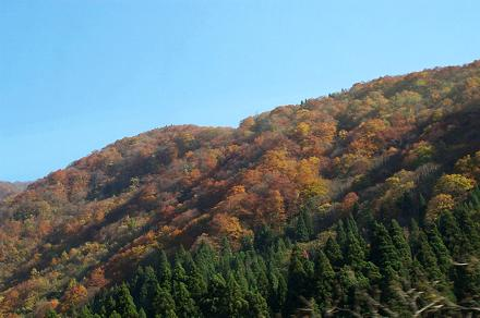Autumn leaves near Takayama